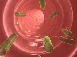черви у человека внутри анизакиды и аникарды